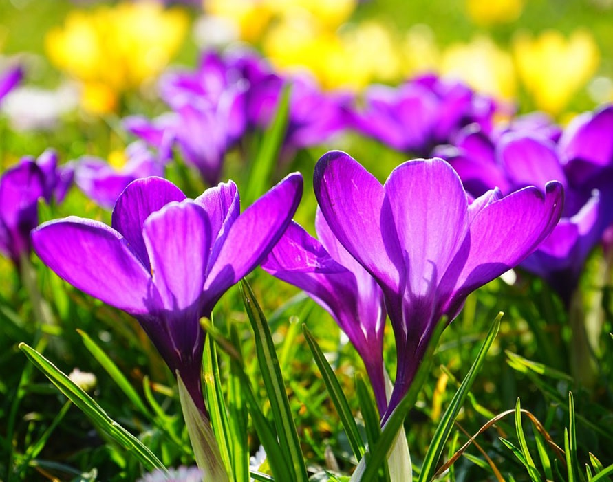 Your HOAs Spring Landscaping Guide