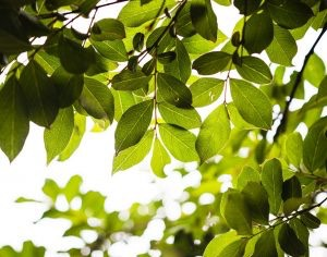 The Best Trees For Your HOA Community Landscape