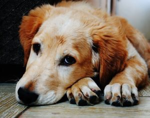 Pet Problems In Your HOA