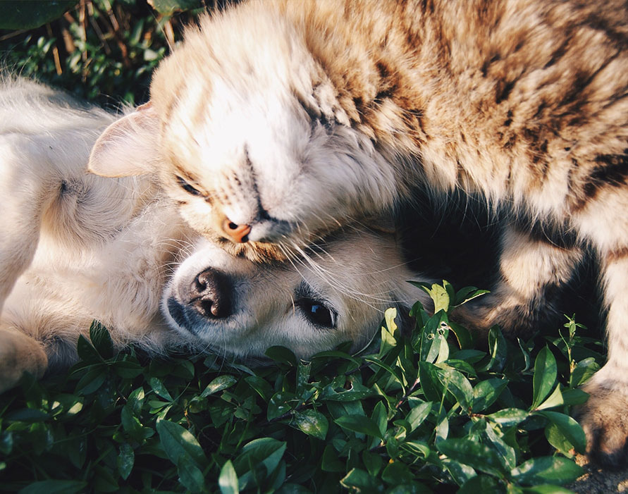 Pet Safety in an HOA Community