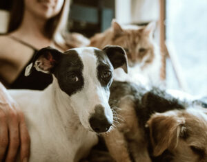 HOA Pet Ownership Questions to Ask