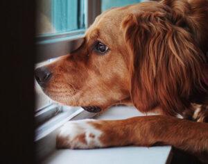 HOA Pet Safety Tips for Summertime