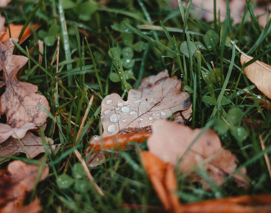 Make the Most Out of Your HOA Landscape for Fall